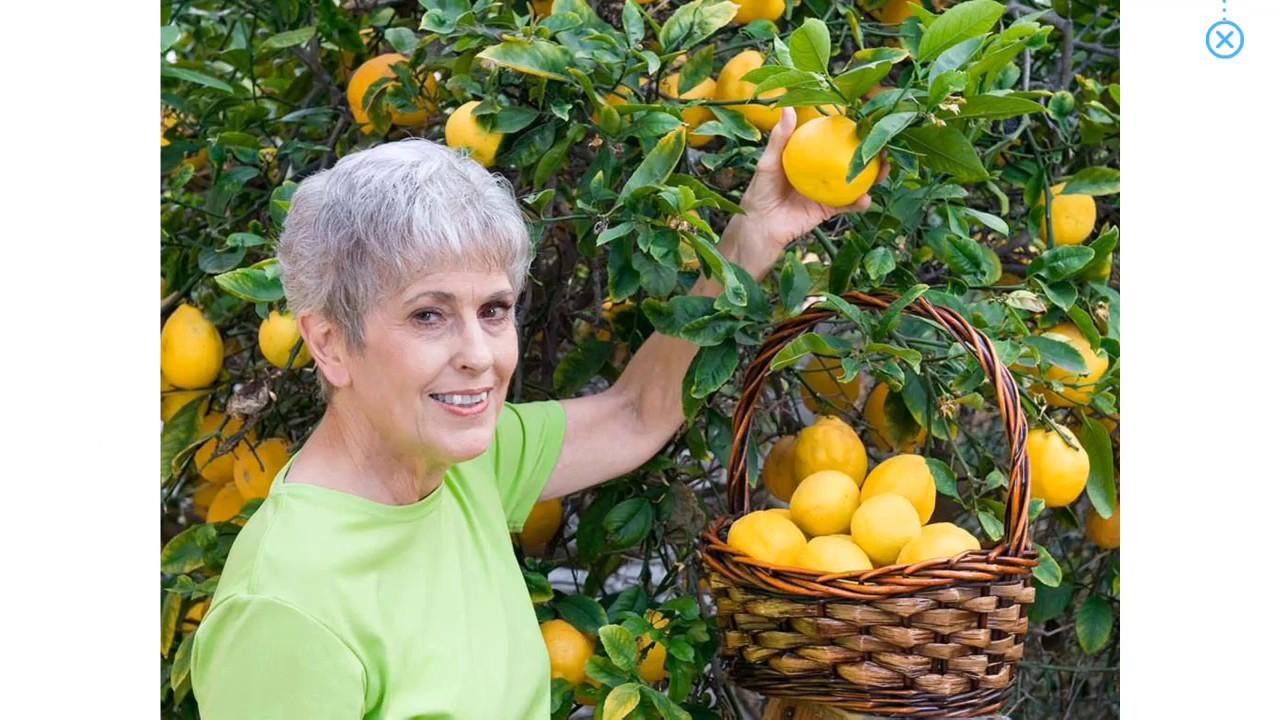 Bài 29.  Bé học các loại quả và các hành động || Baby learns the fruits