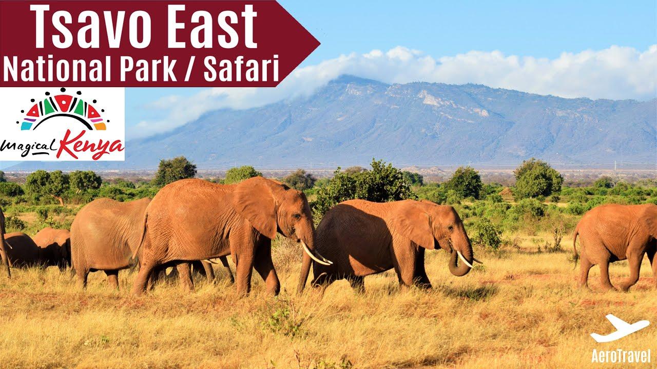 Download TSAVO EAST NATIONAL PARK SAFARI   BIG 5   ULTRA HD   GAME DRIVE   AMAZING KENYA SAFARI IMPRESSIONS