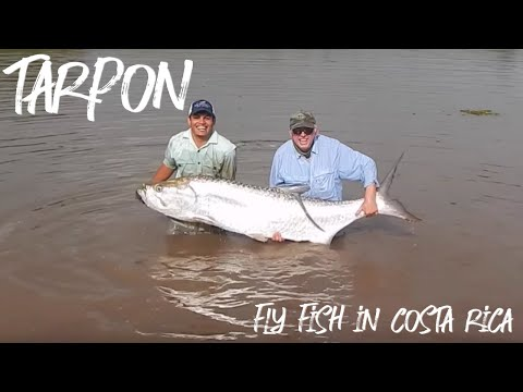 Tarpon In Real Jungle - Fly Fish In Costa Rica