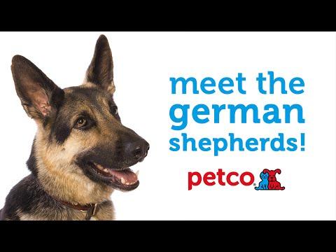 German Shepherd Dog Breed (Petco)