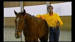 Начальное обучение  Часть 1   Работа с подготовленной лошадью