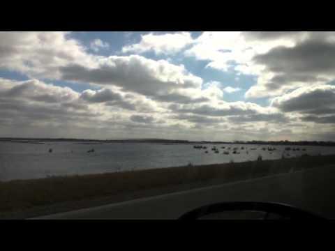 Goose Pond Birds