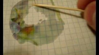 Боится ли рыжий домашний муравей нерафинированого подсолнечного масла