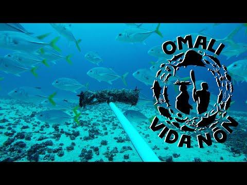 Marine life in Príncipe Island (BRUV surveys - OMALI VIDA NÓN)