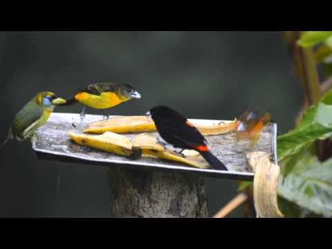 Birding Adventures TV Colombia Birdwatch Episode