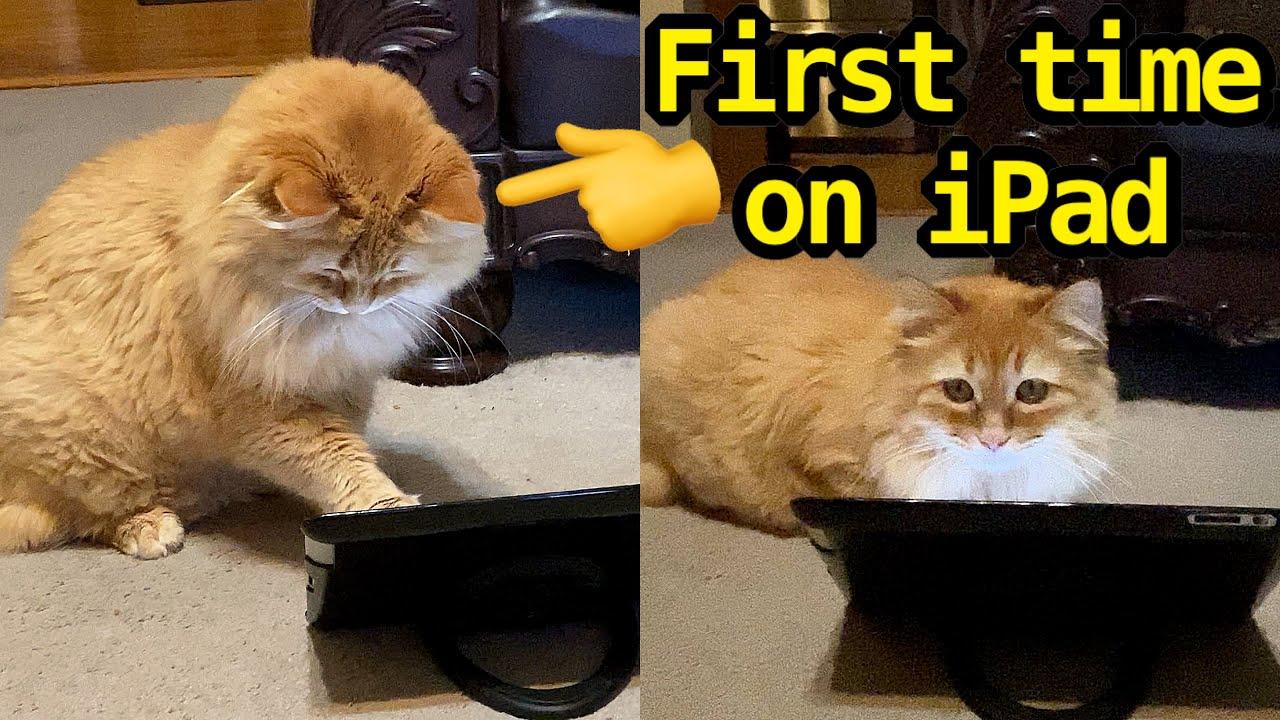 Winston plays with iPad