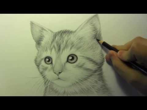 Kedi Çizimi