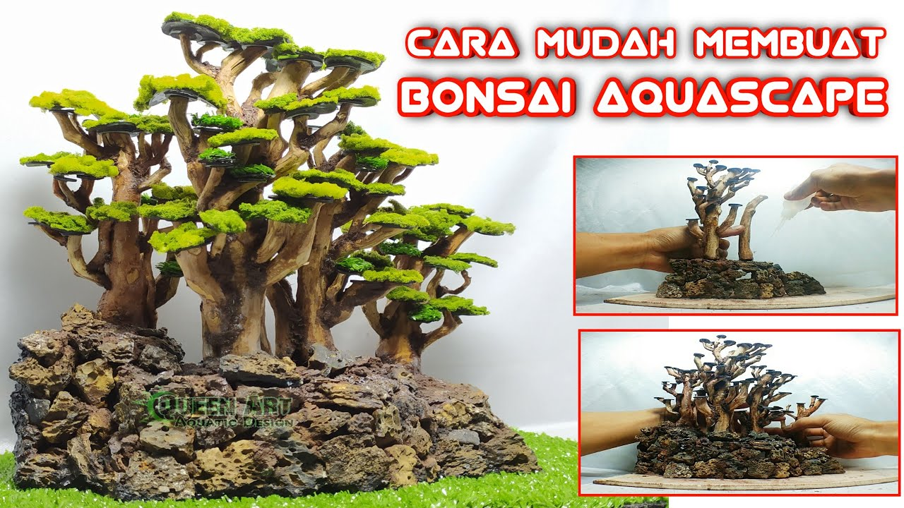 Step By Step Cara Membuat Bonsai Aquascape Akar Senggani ...