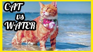 CAT VS WATER  CATS SWIMMING  CAT BATH  FUNNY CATS IN WATER COMPILATION