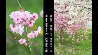 入山アキ子 - 溺れ酒