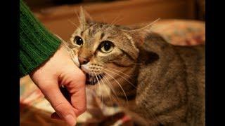 あなたは知ってました?猫が 大好き! を伝えるときの13の行動 可愛らしい仕草に癒される thumbnail