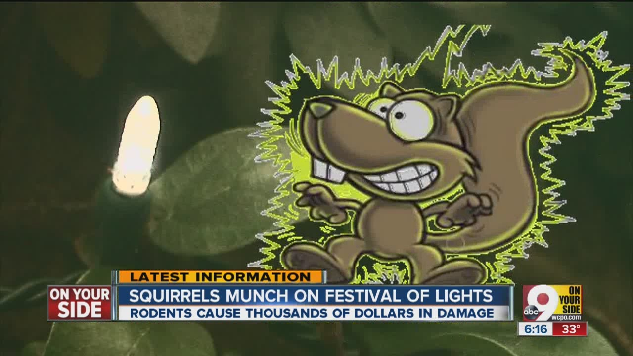 Zoo Battles Squirrels Over Christmas Lights Youtube