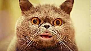 Поющий кот Сальвадор   Salvador singing cat (short version)(самый интересный момент., 2012-08-28T07:26:04.000Z)