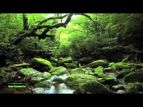 day ambience in forest sound