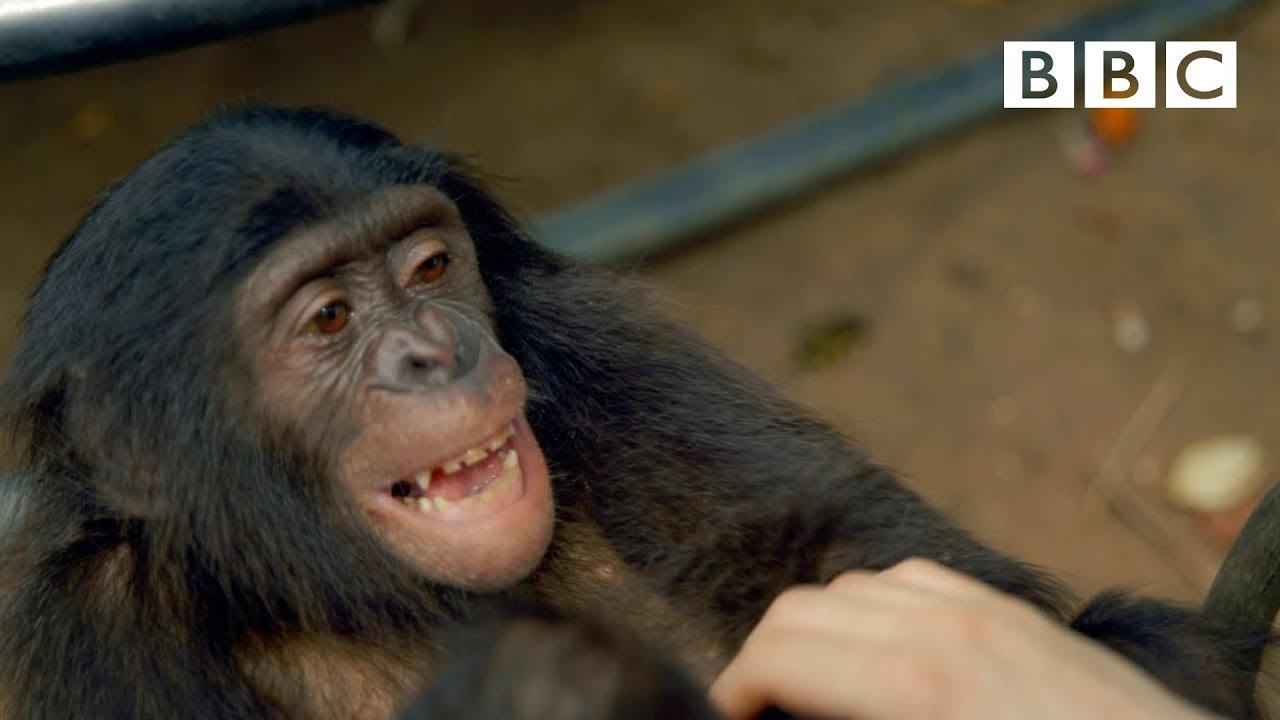 Какие животные умеют смеяться и зачем им это нужно?