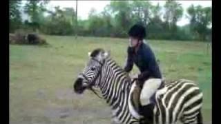 Zack the Zebra Jumping