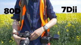 DRTV по-русски: 5 главных отличий Canon 80D & 7D Mark II(DRTV // Перевод - SlyLama Canon 7D Mark II почти 2 года, а значит, в ближайшее время ее преемника ожидать не стоит. Но боле..., 2016-09-03T22:06:30.000Z)