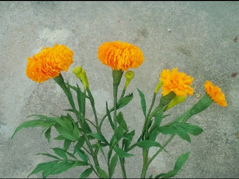 How To Make Marigold Paper Flower From Crepe Paper - Craft Tutorial