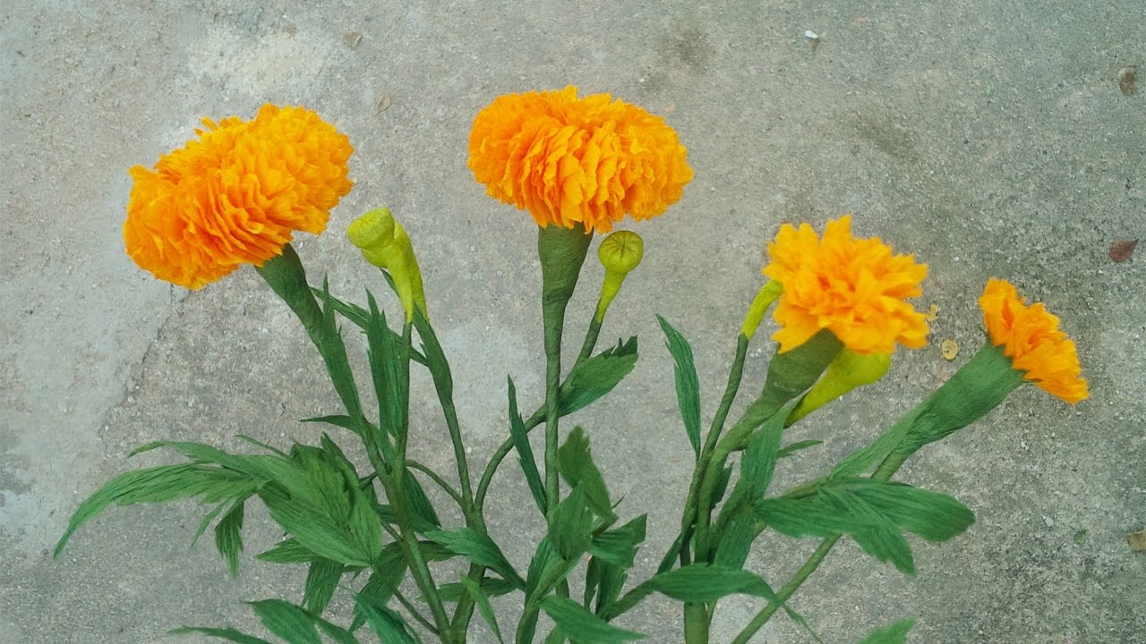 Abc Tv How To Make Marigold Paper Flower From Crepe Paper Craft Tutorial