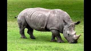 Animals | Zoo | Kids | Music | Preschool | Silly Bus