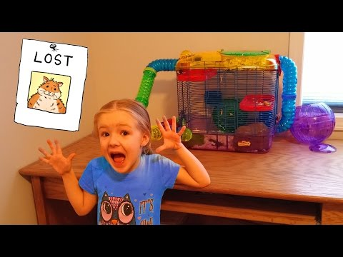OUR HAMSTER ESCAPED!!! Rosie is Missing Somewhere in the House... Lost :'(