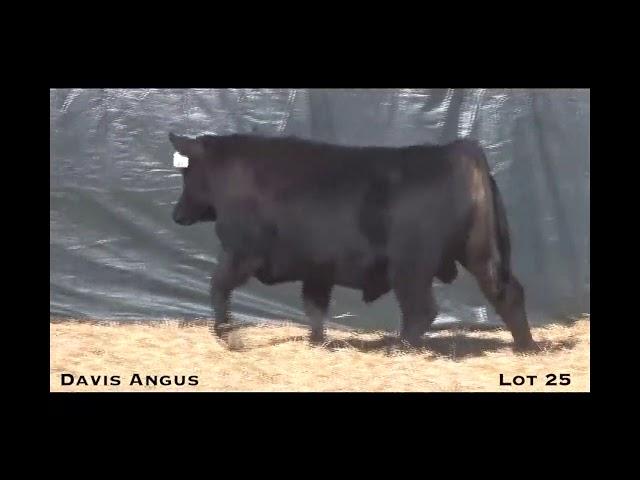 Davis Angus Lot 25