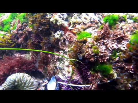 Thumbnail: Life in a tide pool 1
