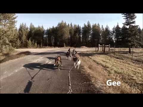 Training Sled Dogs Part 1