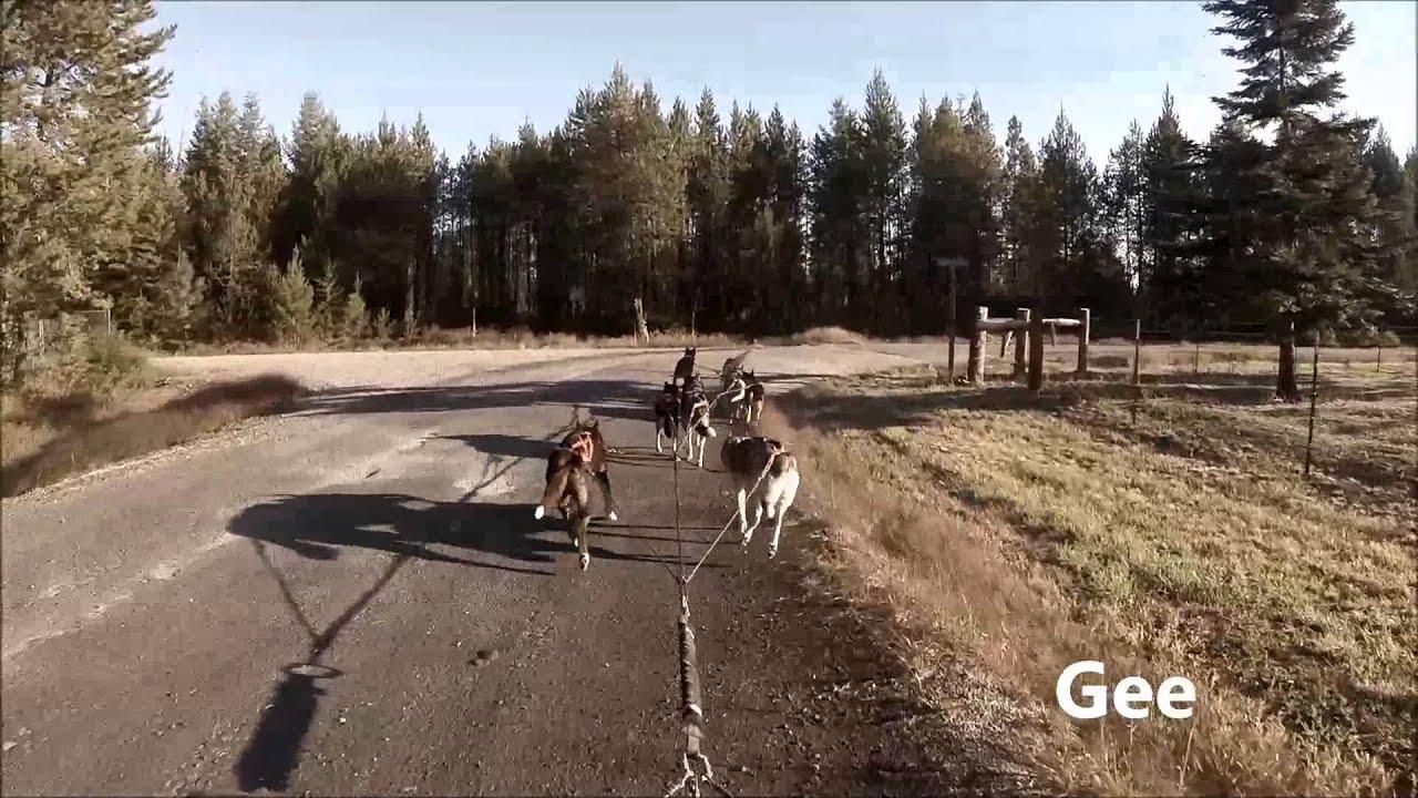 slee dog training
