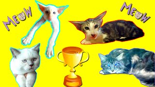 Очень много кошек сразу/Кошки и котики всех пород/Персы, сфинксы, ангорские - таких вы еще не видели