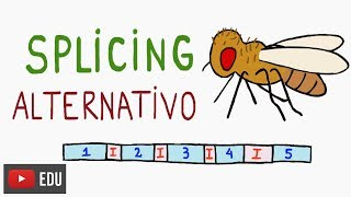 Moscas e o Splicing Alternativo | #InstanteBiotec 50