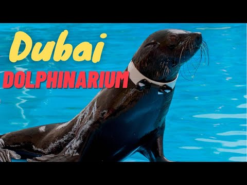 Dubai Dolphinarium Seal Dholphin Magic Show *HD*