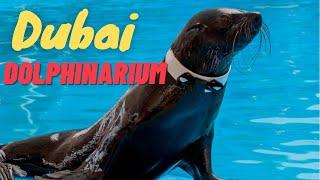 Dubai Dolphinarium Seal Dholphin Magic Show *HD*