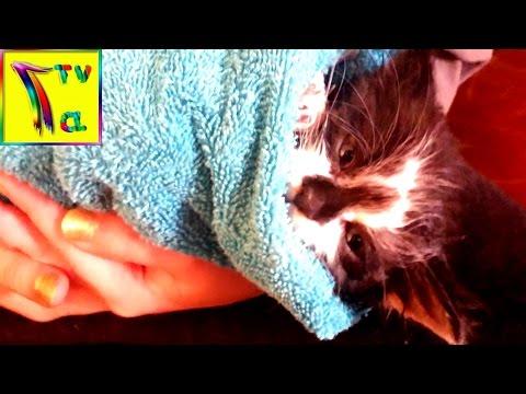 Как отмыть кота от клея для мышей