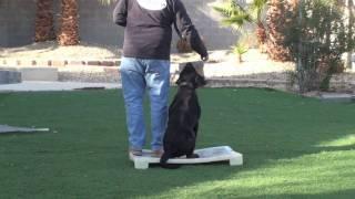 Retriever Training - Left And Right Heel/retrieve. Part 1