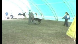 This Video Previously Contained A Copyrighted Audio Track. Due To A Claim By A Copyright Holder, The Audio Track Has Been Muted.     Cane Corso Schutzhund Dog Training