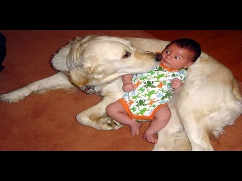 Dog Baby Funny Compilation Annoying Each Other
