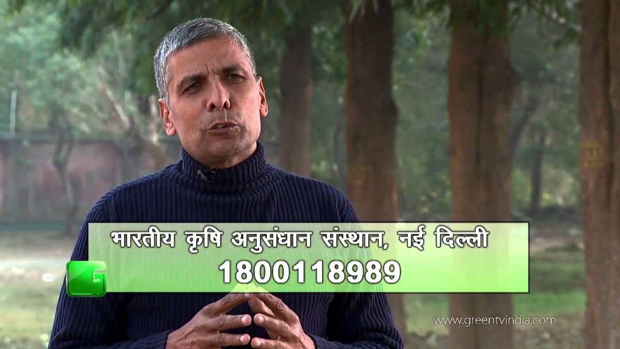 Maize Seeds (मक्का के बीज) (2) In Baatein Kheti Ki - On GreenTv