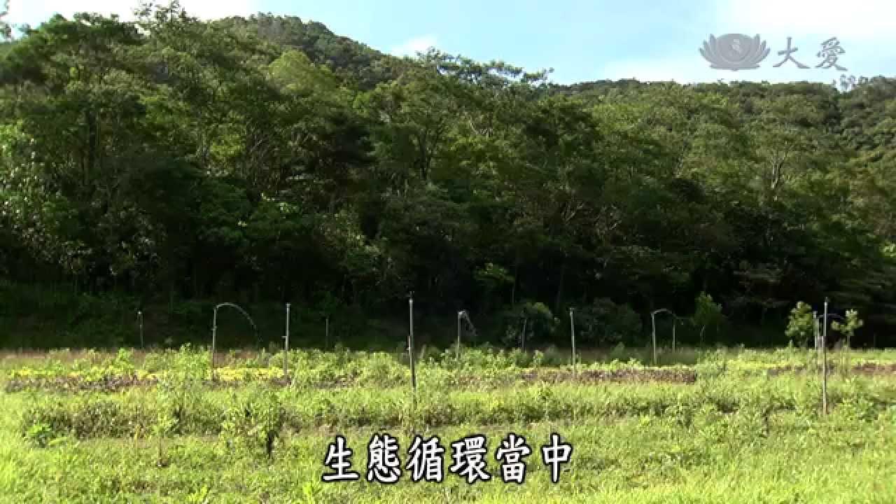 森永部落  農夫與他的田 - VUVU的野菜新生  大愛電視報導