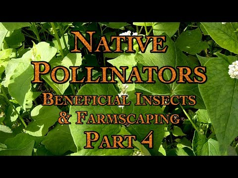 Native Pollinators, Beneficial Insects & Farmscaping Part 4