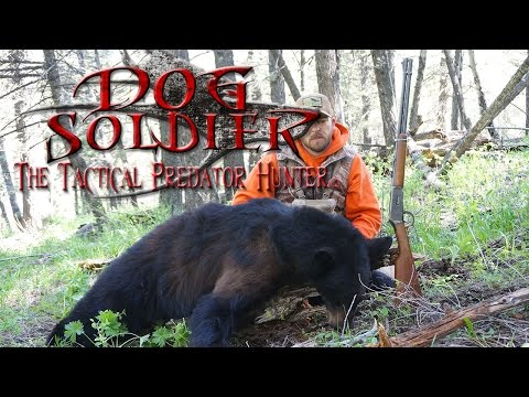 """Big ass Bears!!! Coyote calling and Predator hunting at its Best! Tips and """"how to""""!"""