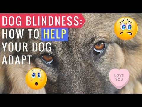 Dog Blindness: How To Help Your Dog Adapt