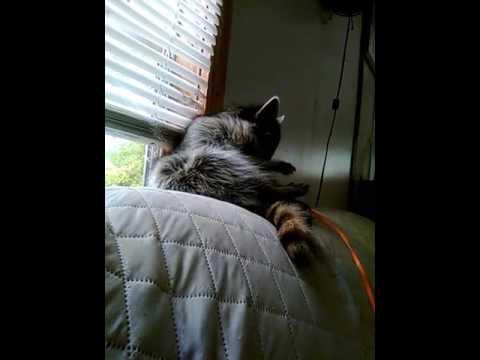 Annoying Loki during naptime ( King Fatness)