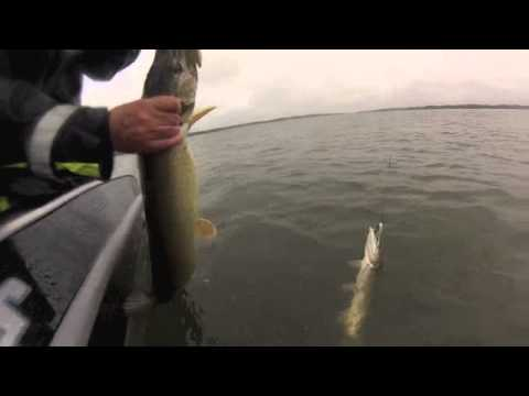 Aland Islands 2013 : jerk-Bait fishing