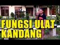 Fungsi Ulat Kandang Untuk Settingan Murai Batu  Mp3 - Mp4 Download