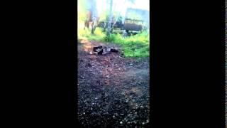 Война видео Украина Донбас Российский спецназовец опубликовал видео боя в Марьинке   YouTube