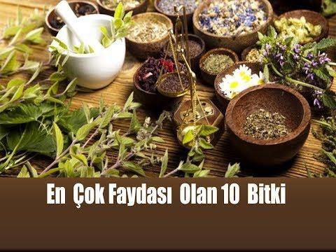Dünyada Bilinen En Faydalı 10 Bitki Ve Eşsiz Yararları/ En Faydalı Bitkiler