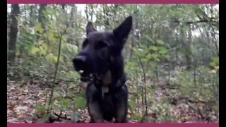 Спасение в лесу: собака-поисковик в работе