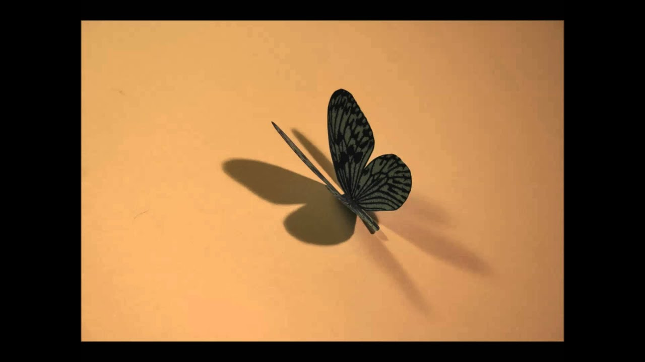 Stop Frame Animation Paper Butterfly - YouTube