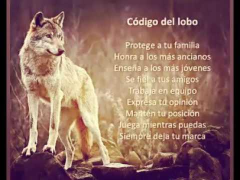 Frases De Lobos Youtube